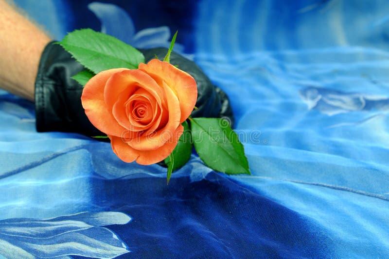 Rose de rose avec la main noir-enfilée de gants sur un fond bleu images stock
