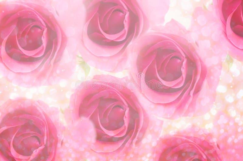 Rose de rose avec le bokeh léger images stock
