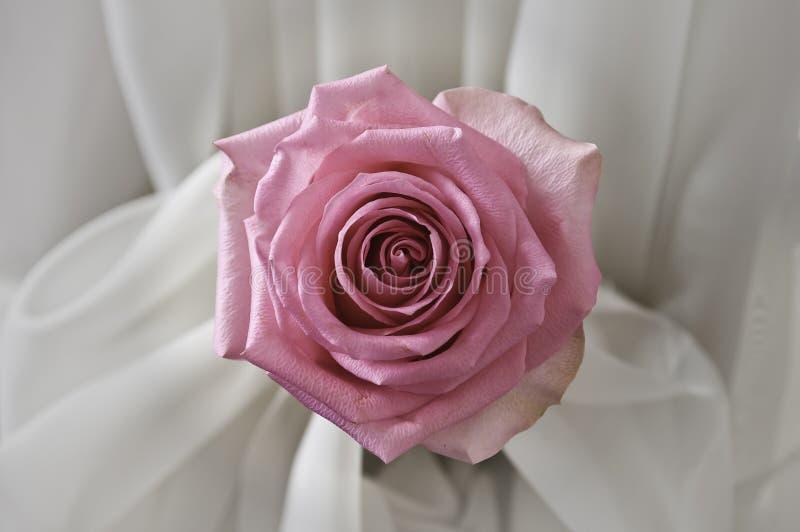 Rose de rose en soie photographie stock libre de droits