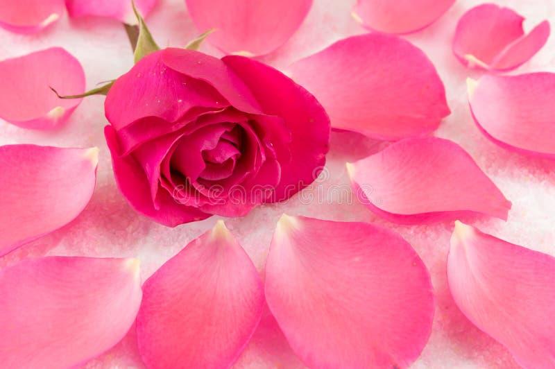 Rose de rose sur les pétales de rose et le sel de bain image libre de droits