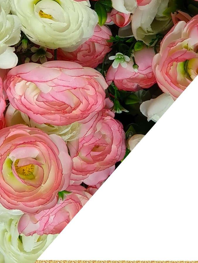 Rose de roses de carte de voeux beau et blanc de rose de bouquet de jour de femmes de fond et de corail floral blanc de corail photo libre de droits
