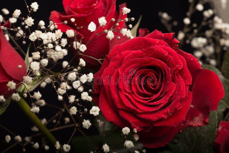 Rose de rouge photo libre de droits