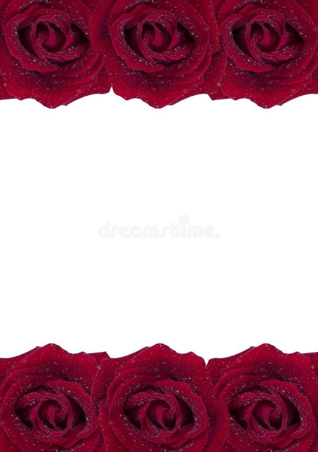 Rose 46 de rouge photo stock