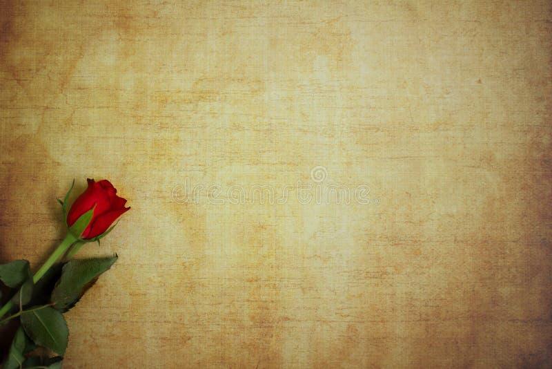 Rose de rouge se trouvant sur le papier de vintage pour le message photographie stock libre de droits