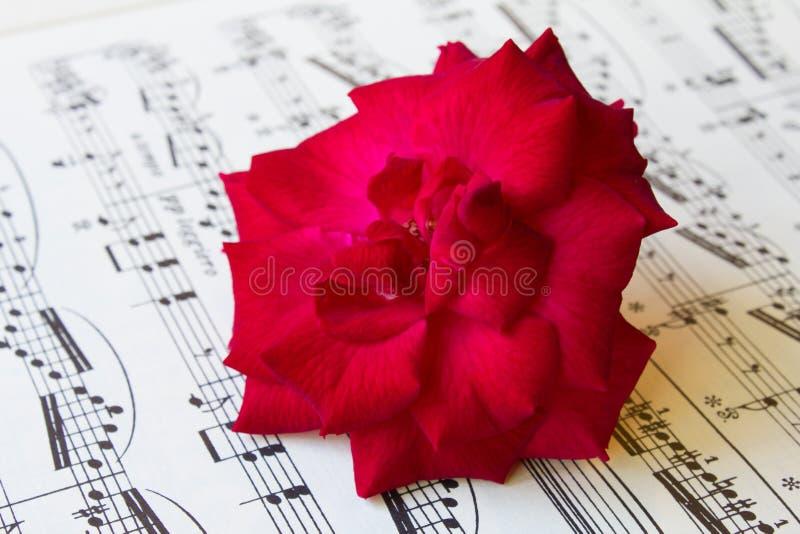 Rose de rouge sur une musique de feuille antique image stock