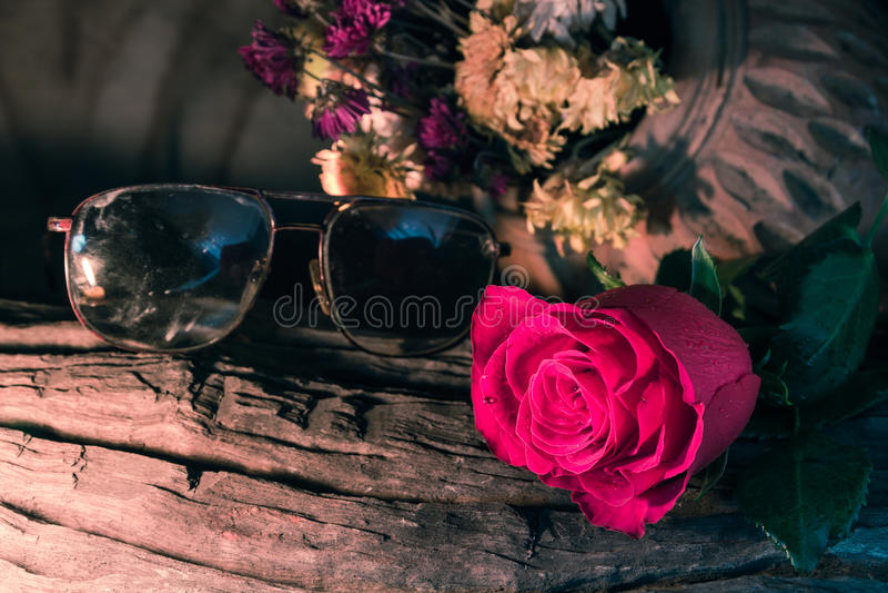 Rose del amor imagen de archivo