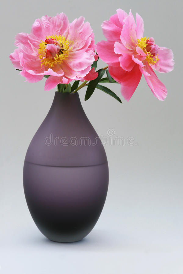 Rose del Peony sul vaso immagini stock libere da diritti