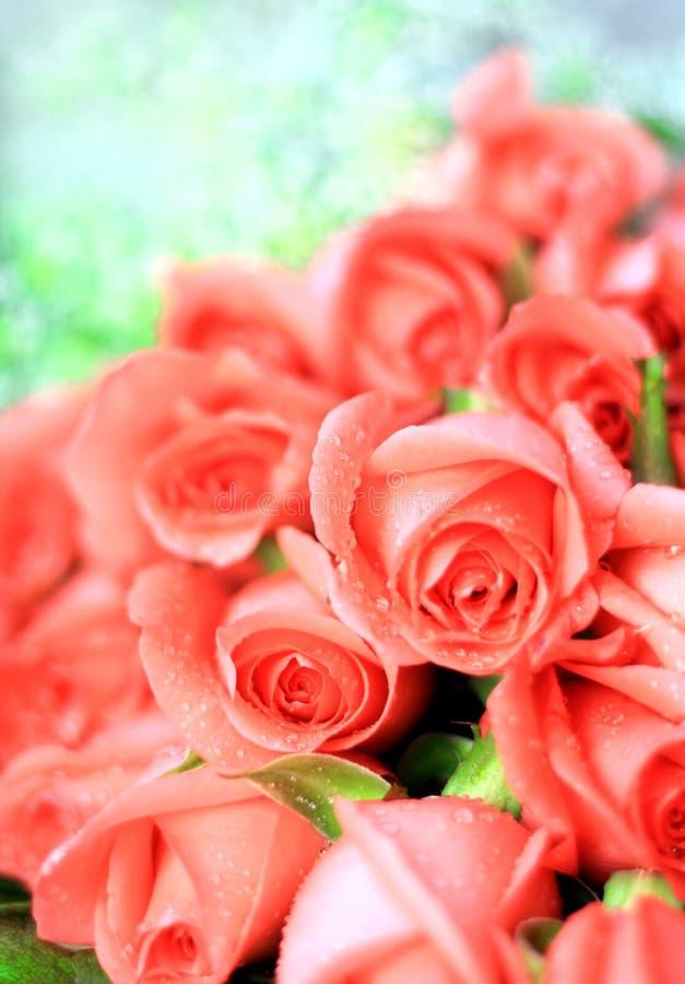 Rose dentellare romantiche fotografie stock libere da diritti