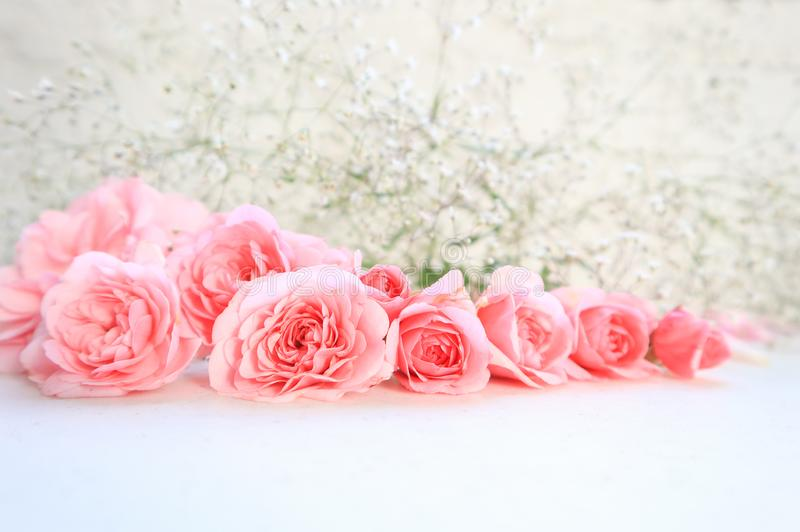 Rose dentellare su priorit? bassa bianca Perfezioni per le cartoline d'auguri del fondo e gli inviti delle nozze, il compleanno,  fotografie stock