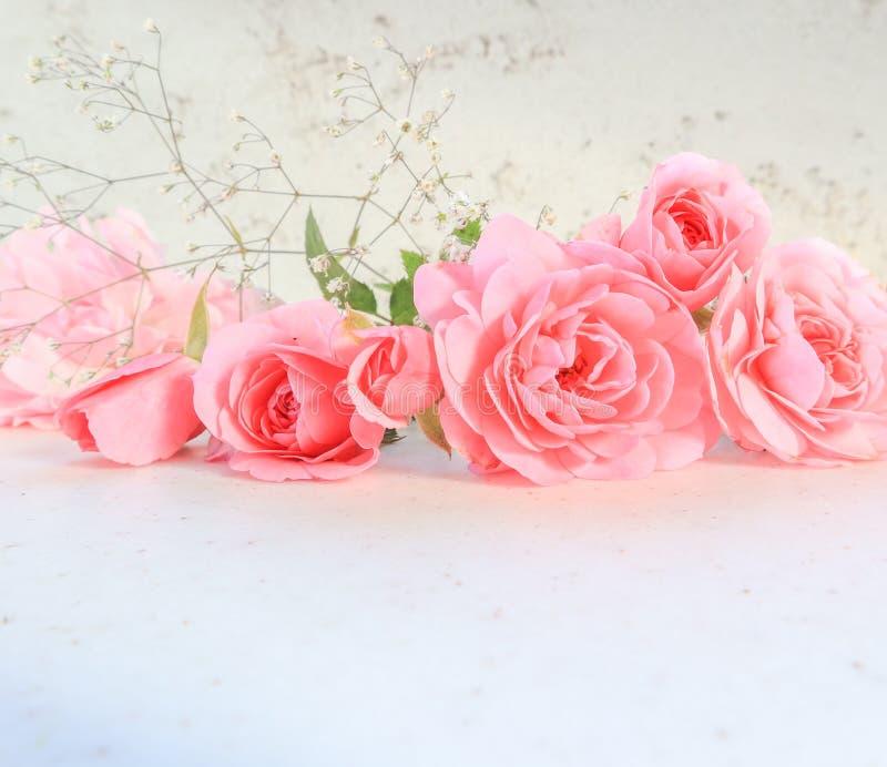 Rose dentellare su priorit? bassa bianca Perfezioni per le cartoline d'auguri del fondo e gli inviti delle nozze, il compleanno,  fotografia stock