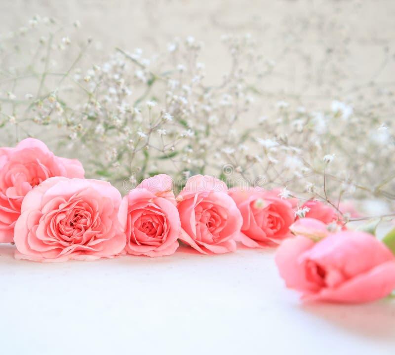 Rose dentellare su priorit? bassa bianca Perfezioni per le cartoline d'auguri del fondo e gli inviti delle nozze, il compleanno,  fotografia stock libera da diritti