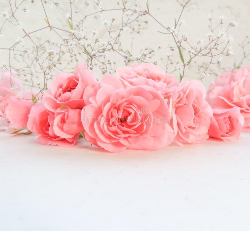 Rose dentellare su priorit? bassa bianca Perfezioni per le cartoline d'auguri del fondo e gli inviti delle nozze, il compleanno,  immagini stock