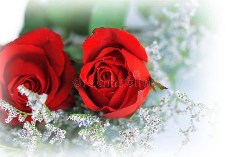 Rose der Liebe lizenzfreies stockfoto