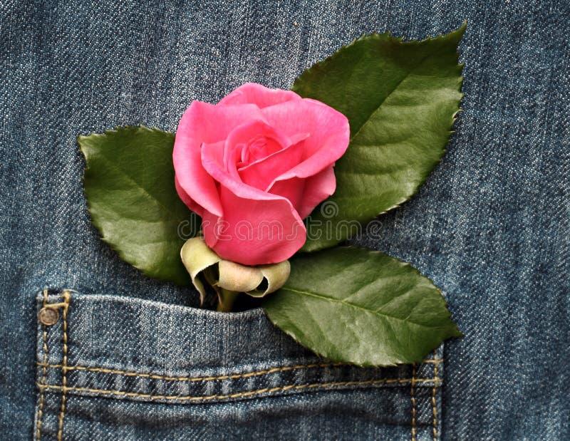 Rose in der Tasche lizenzfreies stockfoto