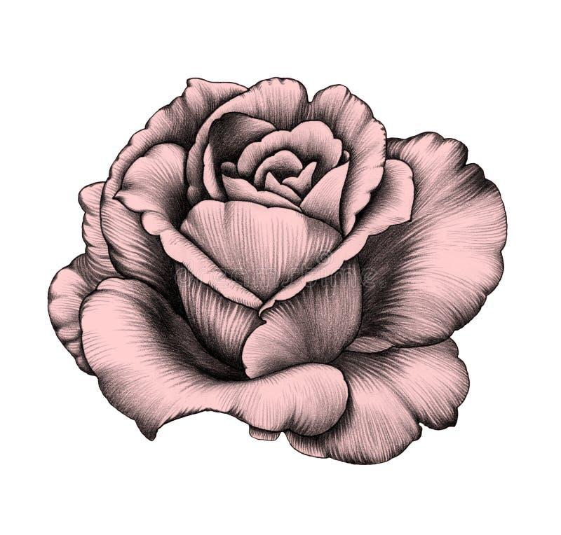 rose dessin au crayon illustration stock illustration du couleurs 60973475. Black Bedroom Furniture Sets. Home Design Ideas