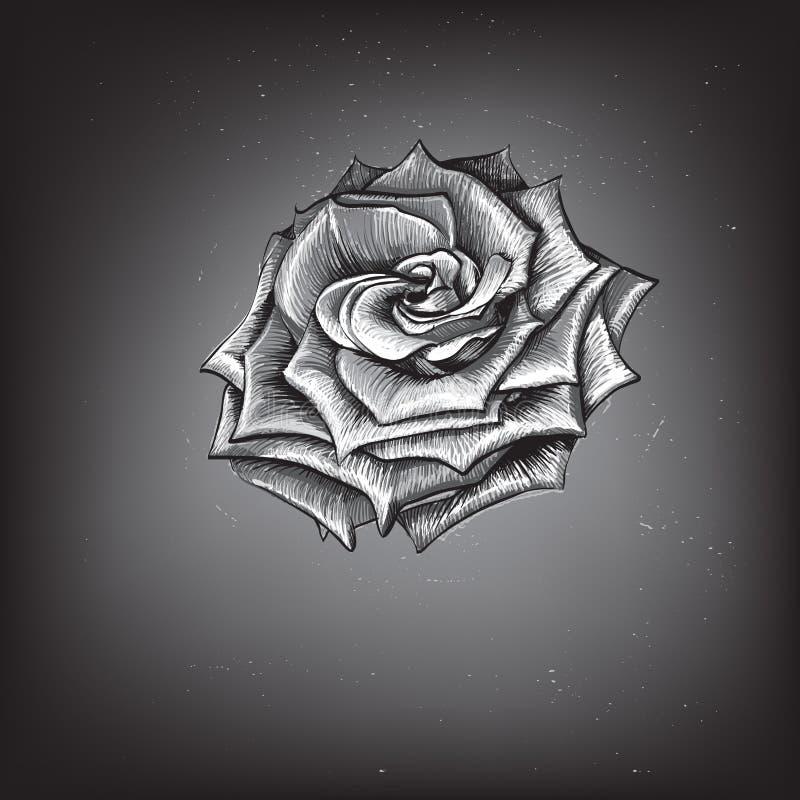 Rose, dessin au trait graphique dessin d'aquarelle illustration stock