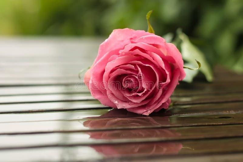 rose deszcz fotografia stock