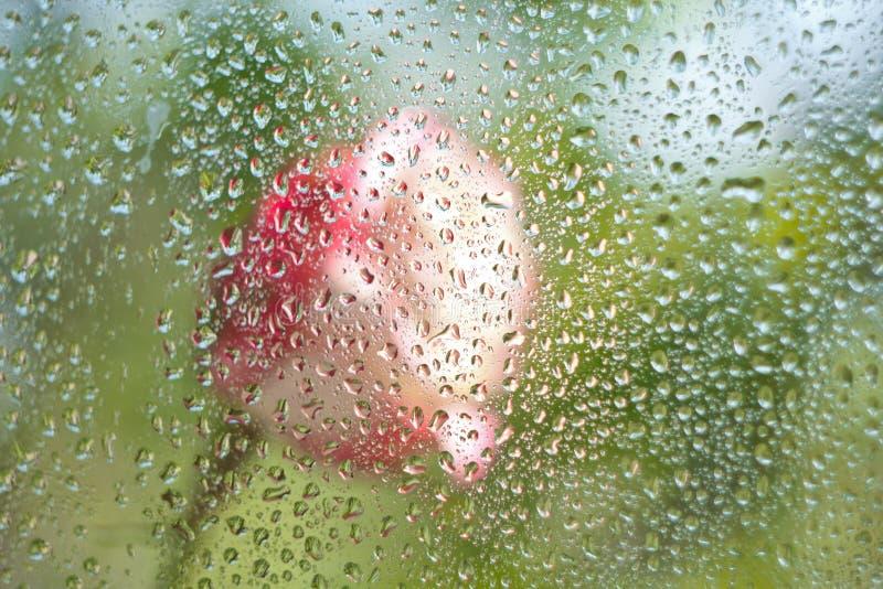 Rose detrás del vidrio imagen de archivo libre de regalías