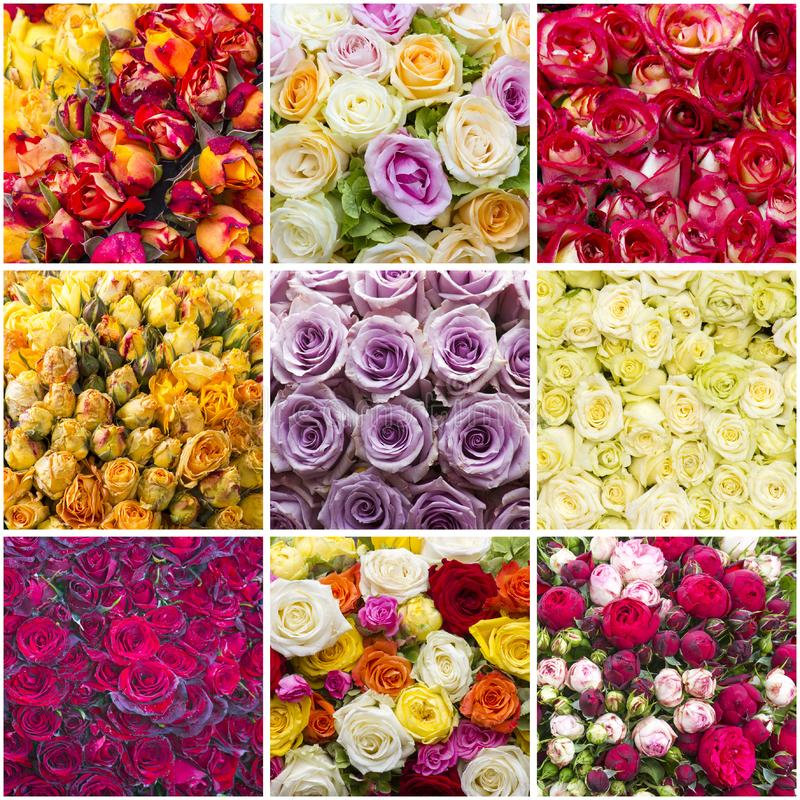 Rose di Colourfull - collage immagini stock libere da diritti