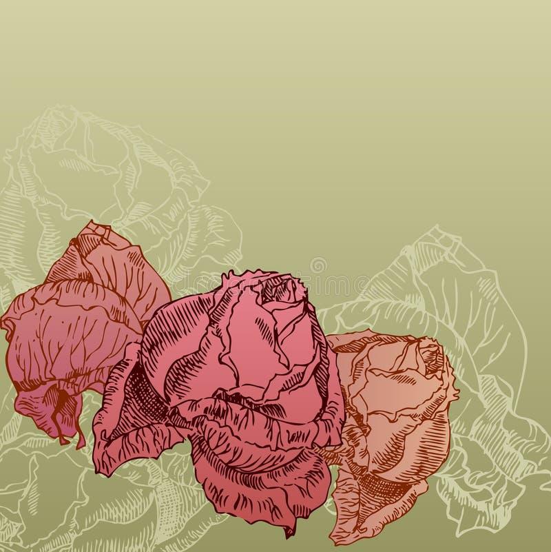 Rose disegnate a mano sulla priorità bassa di seppia illustrazione vettoriale