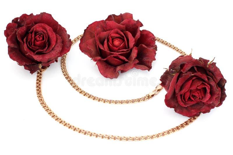 Rose e catena secche dell'oro su un fondo bianco fotografie stock libere da diritti
