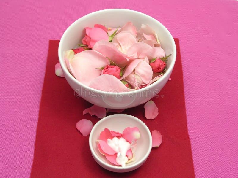 Rose e crema dentellare immagine stock libera da diritti