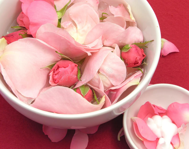 Rose e crema dentellare fotografia stock libera da diritti