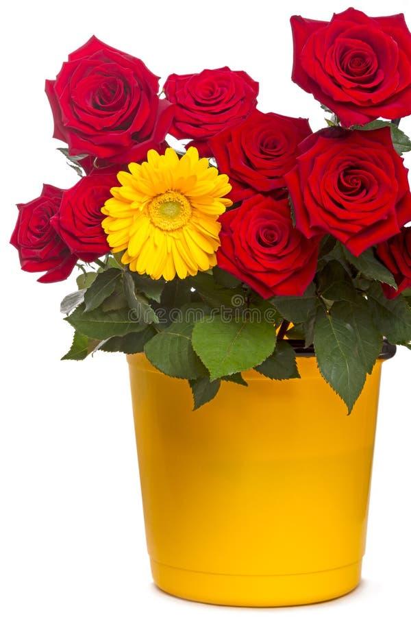 Rose e Gerber in secchio giallo immagine stock libera da diritti