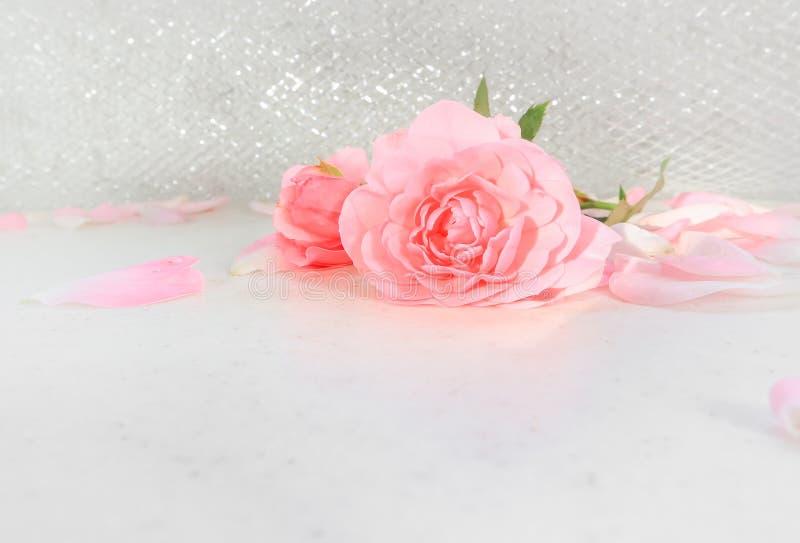 Rose e petali dentellare su priorit? bassa bianca Perfezioni per le cartoline d'auguri del fondo e gli inviti delle nozze, il com immagine stock