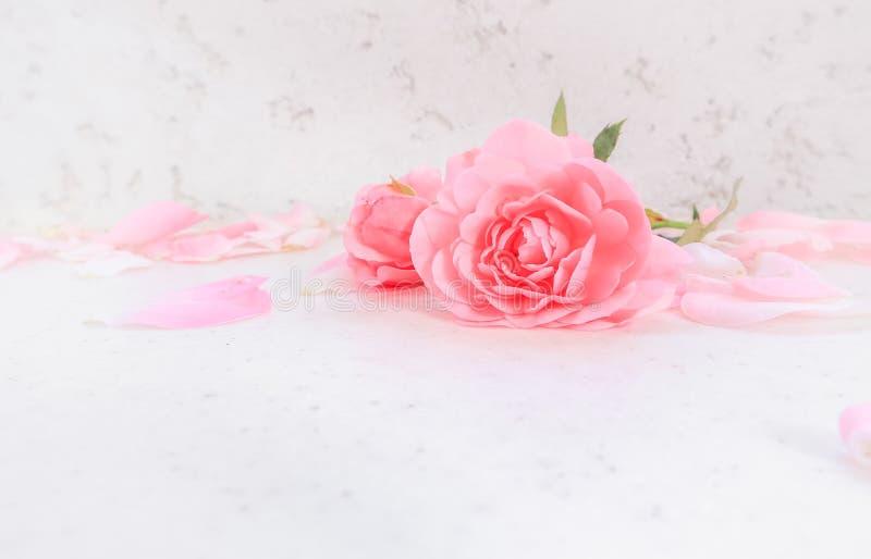 Rose e petali dentellare su priorit? bassa bianca Perfezioni per le cartoline d'auguri del fondo e gli inviti delle nozze, il com fotografia stock