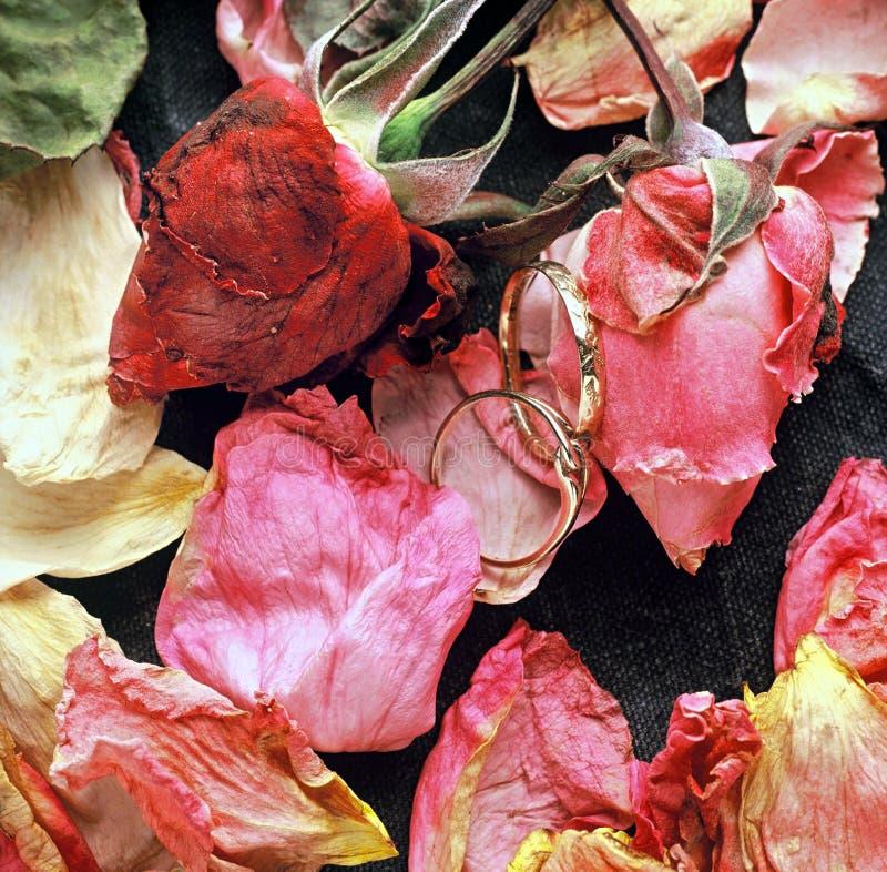 Rose ed anelli fotografie stock libere da diritti