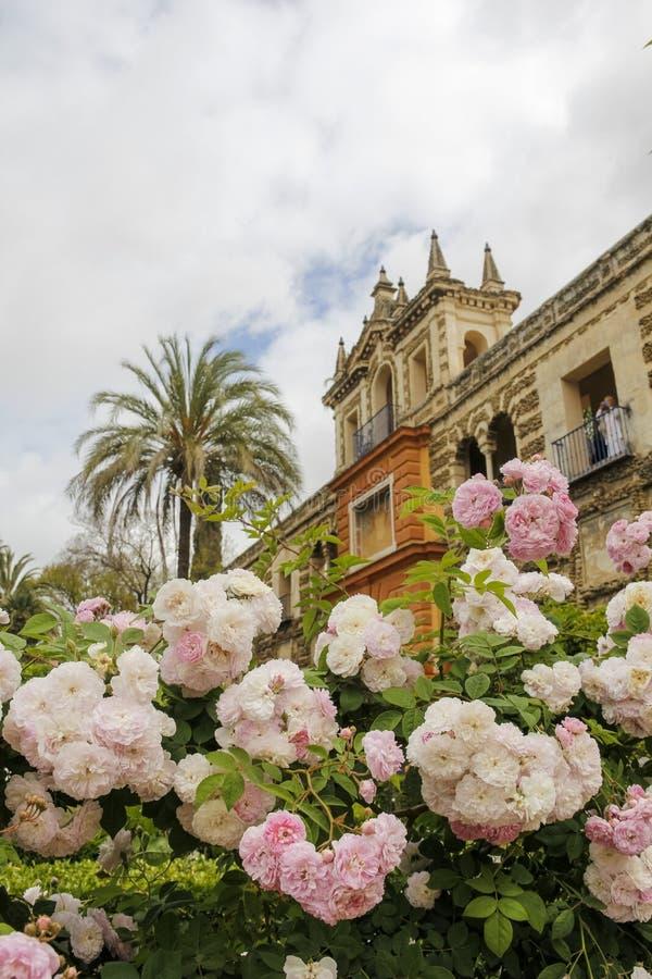 Rose ed architettura in Siviglia immagine stock