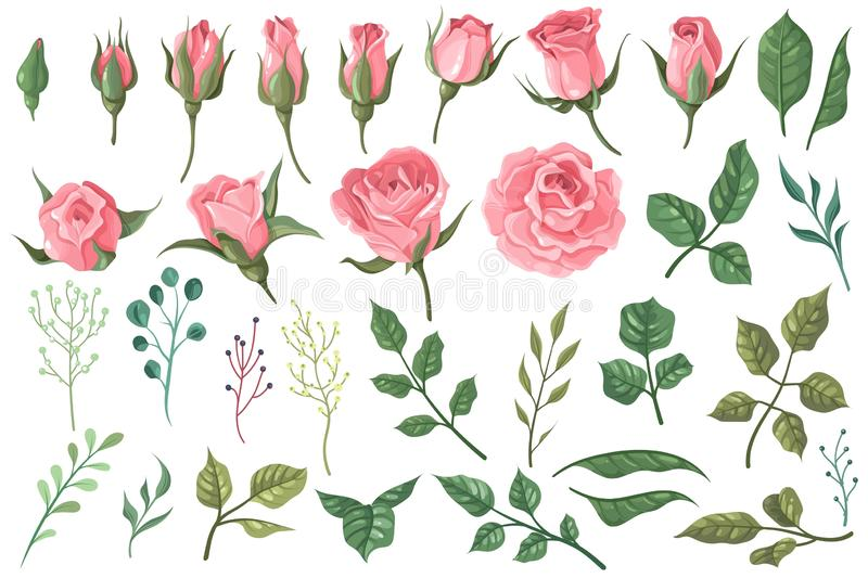 Rose elements. Pink flower buds, roses with green leaves bouquets, floral romantic wedding decor for vintage greeting stock illustration