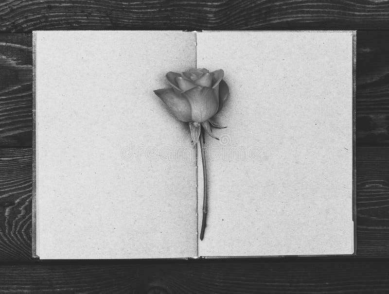 Rose en el libro abierto Fondo dramático Fondo de luto monocromático fotografía de archivo