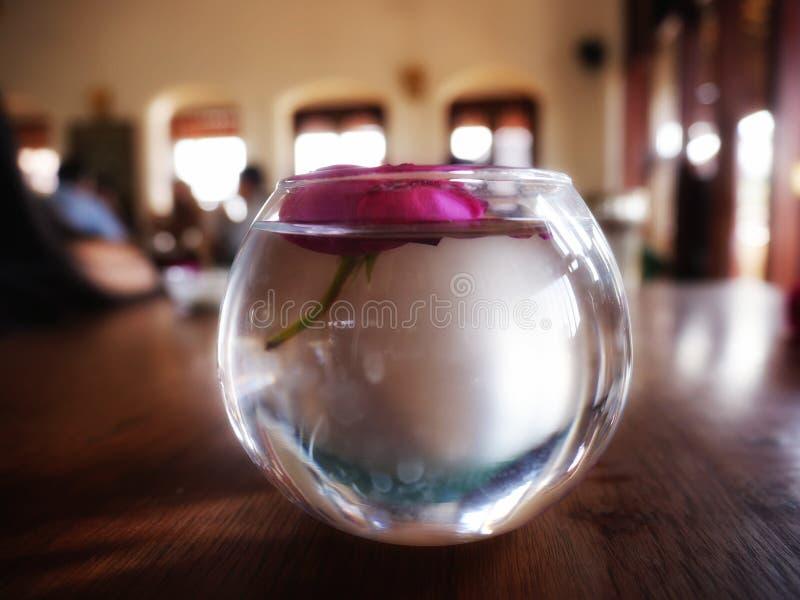 Rose en un cuenco de agua fotos de archivo libres de regalías