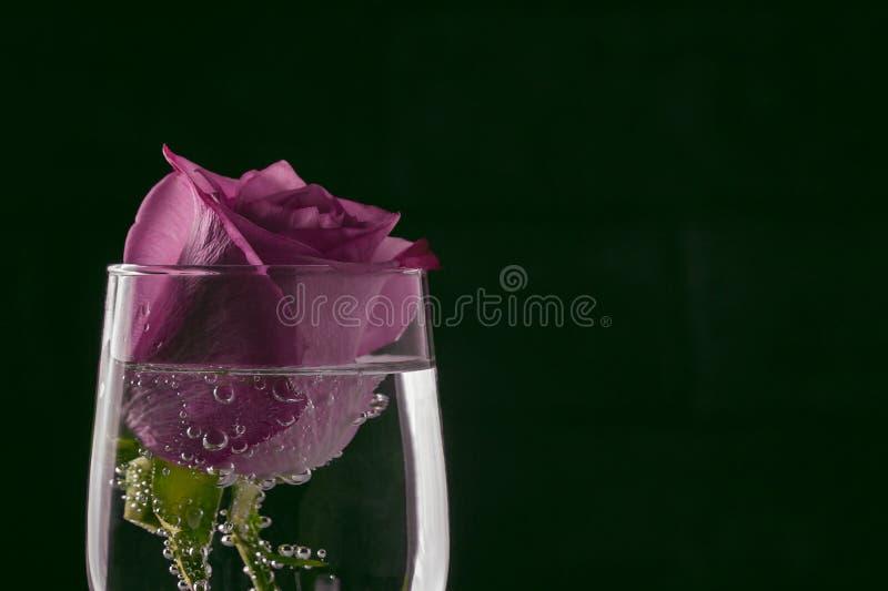 Rose en un vidrio del agua chispeante con las burbujas - una plantilla para una tarjeta de felicitación fotos de archivo