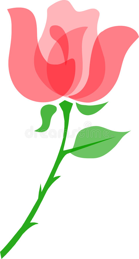 Rose/eps. Illustration of a simple yet elegant red rose using transparent layering...want to change the colors? eps file available stock illustration