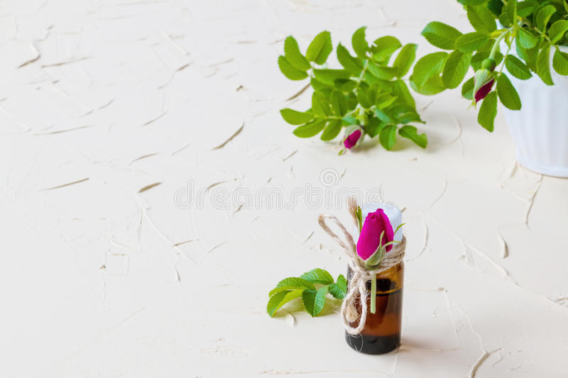 Rose essential oil in a glass bottle on a light table. Used in medicine, cosmetics and aromatherapy. Fresh flowers and green leave royalty free stock images