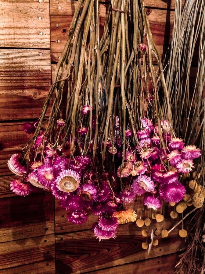 Rose et accrocher sec jaune de fleurs à l'envers sur un mur en bois photographie stock