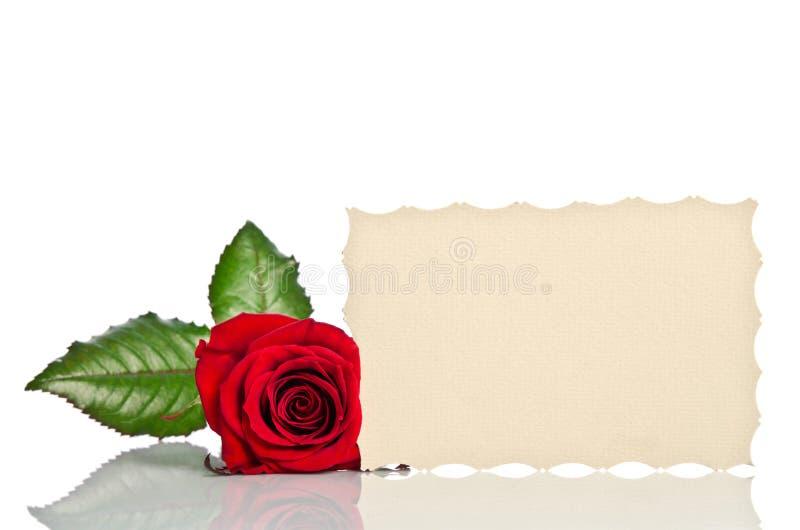 Rose et carte cadeaux de rouge pour le texte photographie stock