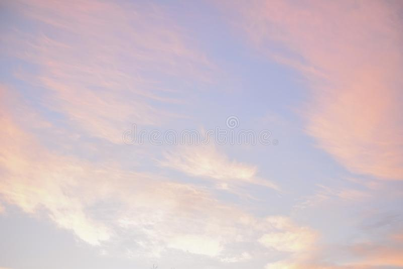 Rose et ciel en pastel bleu images stock
