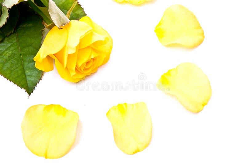 Rose et pétales images libres de droits