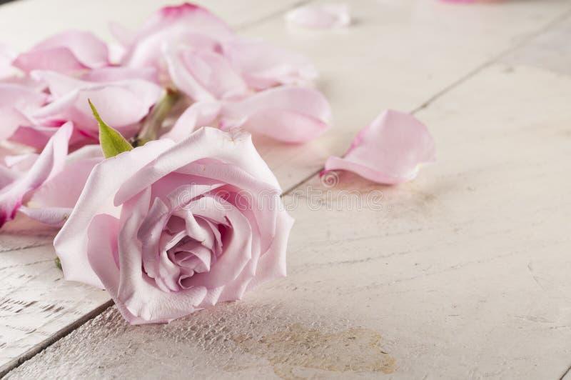 Rose et pétales au-dessus de fond en bois photo stock