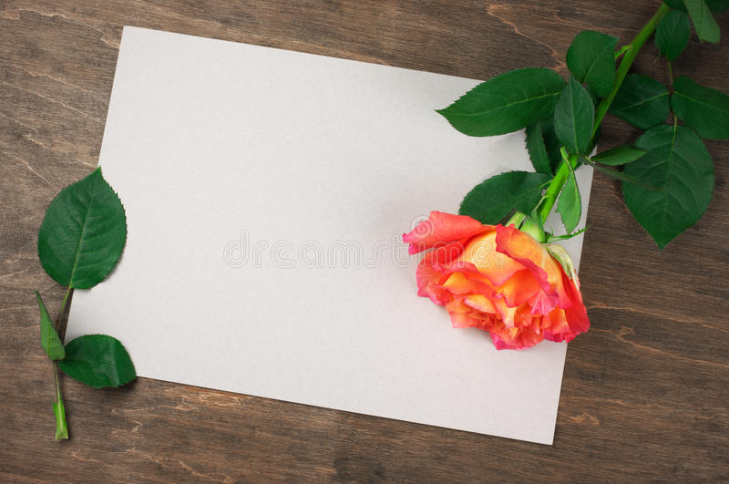 Rose et page blanche photos stock