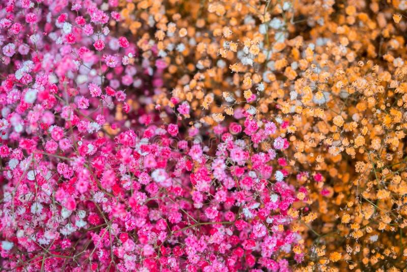 Rose et petit fond orange de composition en fleurs photos stock