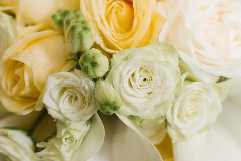 Rose et roses de thé hybrides oranges images stock