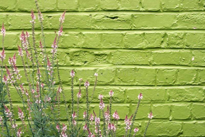 Rose et vert photo stock