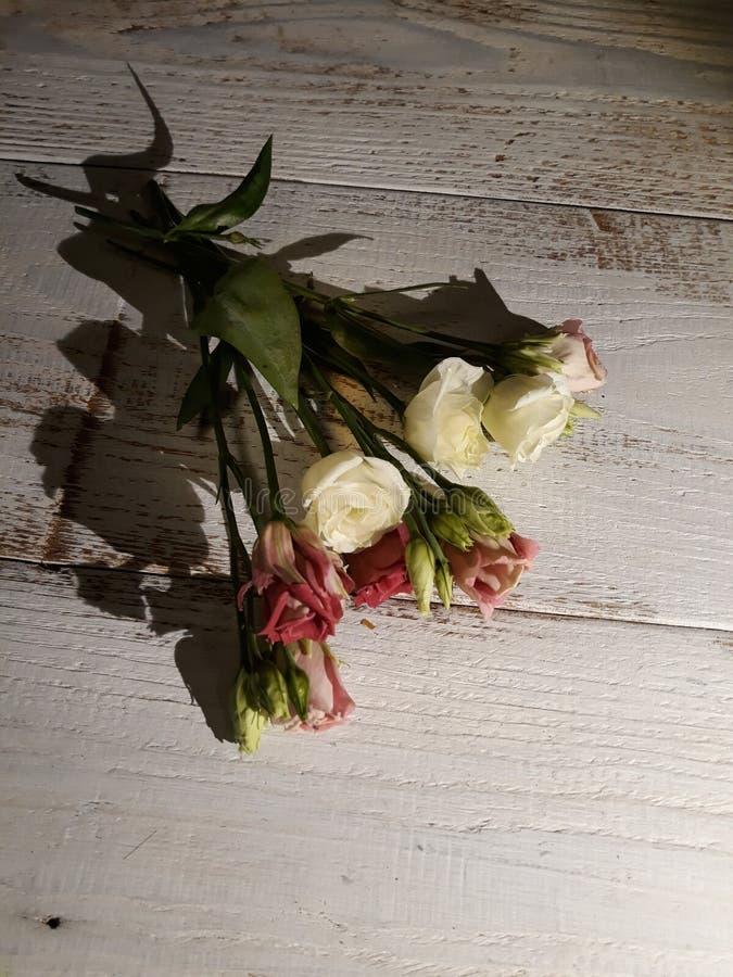 Rose, eustomas ed ombra fotografia stock