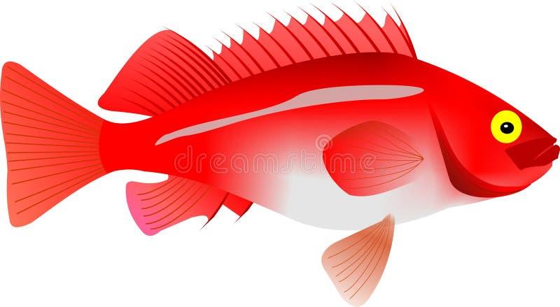Rose Fish ilustração royalty free