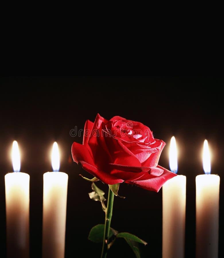 Rose And Flame imagem de stock